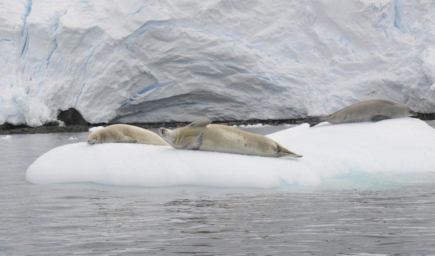 Arved Fuchs - Antarktis