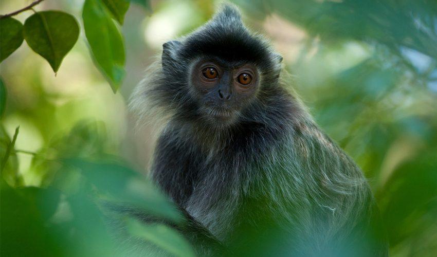 Regenwälder - Leben im Dschungel
