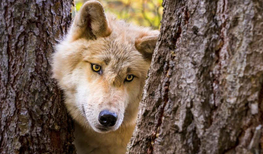 Sehnsucht Wildnis. Quer durch Kanada & Alaska