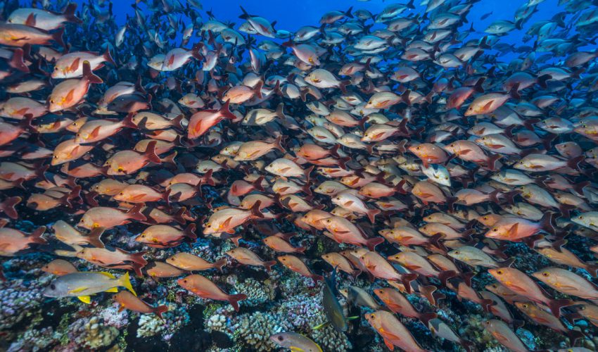 Uli Kunz Leidenschaft Ozean 04