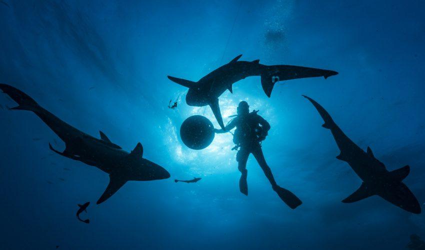 Uli Kunz Leidenschaft Ozean 05